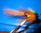 Eany Tailfire Shrimp